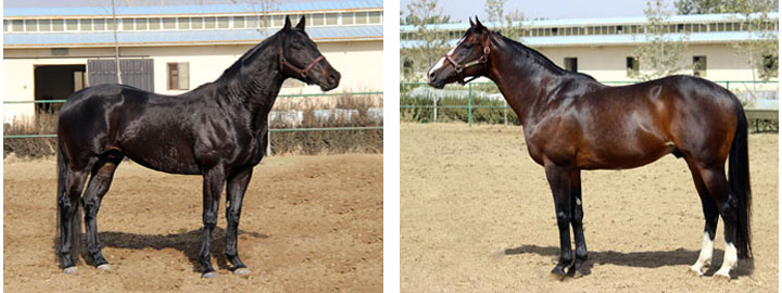 قیمت آموزش اسب سواری چیتگر